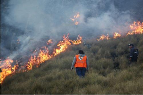 Los incendios forestales en el Cusco han dejado 7,000 hectáreas de flora y fauna silvestre afectadas o perdidas.