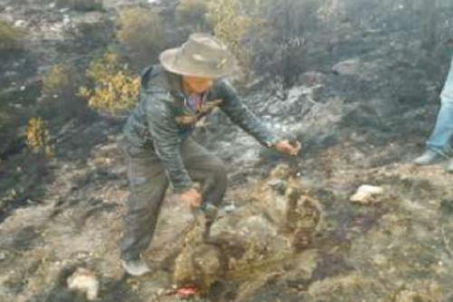 Los incendios forestales ha ocasionado daños a la flora y fauna.