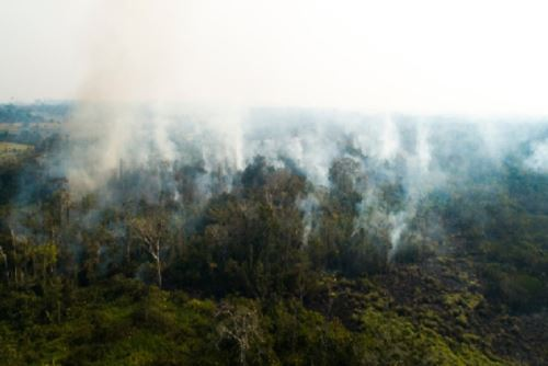 La quema de pastos en diversas localidades de Madre de Dios ha ocasionado siniestros forestales.