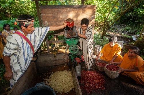 En la región San Martín ejecutarán proyecto agroforestal que consiste en combinar los cultivos de café con árboles maderables.