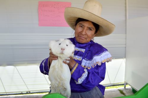 La Red de Productores de Cuy de Condebamba Alto (Cajamarca) cuenta con 43 socios que tienen más de 40,000 ejemplares.
