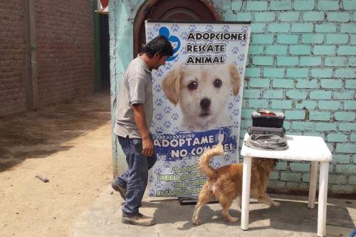 Albergue de perros
