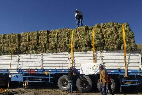 Agro Rural distribuye 44,000 pacas de heno para los ganaderos de los distritos afectados por las explosiones del volcán Ubinas (Moquegua).