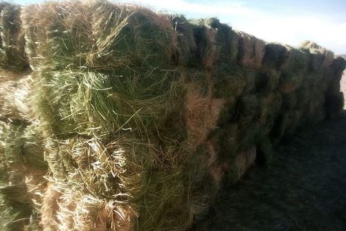 El heno es hierba cortada o seca de gramíneas o de leguminosas, mezcladas con otras hierbas como la avena y la alfalfa.