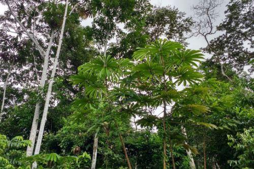 La ACP Zoo Perú I conservará y protegerá los recursos forestales (cobertura vegetal), flora y fauna silvestre en la ruta Iquitos-Nauta, región Loreto.