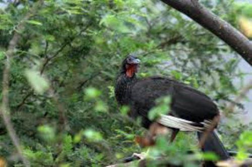 El ACR Bosque de Moyán-Palacio, ubicado en la región Lambayeque, alberga una gran diversidad de flora y fauna.