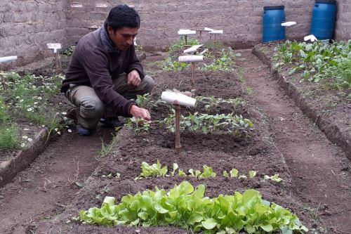 Familias campesinas obtienen con éxito una producción superior a las 2,000 toneladas de productos como zanahoria, lechuga, espinaca, col, cebolla, betarraga, apio y acelga.