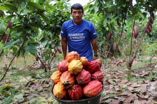 Los árboles del cacao son originarios de la selva amazónica que se extiende ampliamente por Perú.