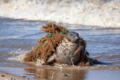 Contaminación de plásticos en océanos