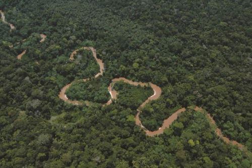 Muy lluvioso y cálido son los climas predominantes en la Selva.