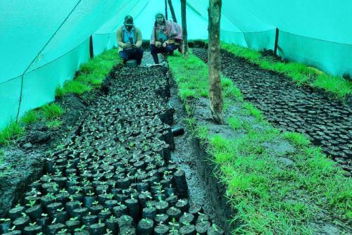En esta oportunidad se prioriza la instalación de plantas nativas como el quinual.