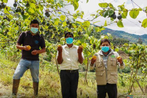 Agricultores de Chinchao reciben asistencia técnica en sus parcelas de producción.
