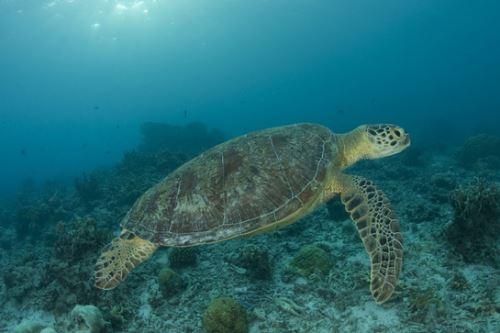 Las tortugas marinas controlan las poblaciones de diversas especies.
