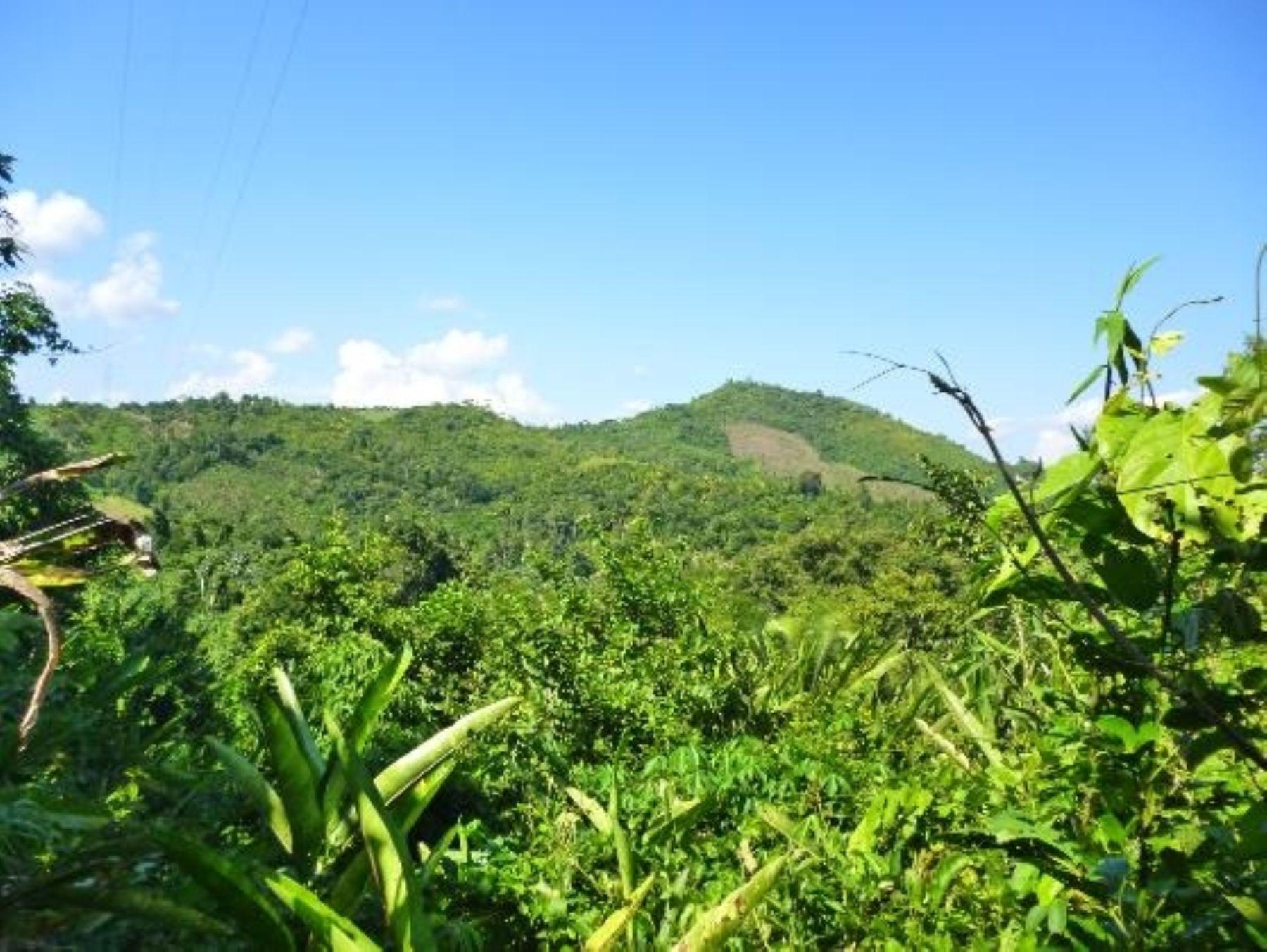 Amazonas cuenta con una nueva área de conservación privada.Foto:  ANDINA/Difusión