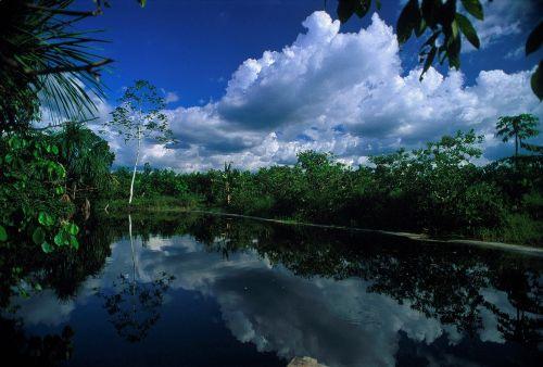 El Perú es un país de bosques, dado que más del 60% de su territorio está cubierto por árboles de distintas especies, y la región Amazónica es la de mayor superficie forestal con alrededor de 73 millones de hectáreas. ANDINA/archivo
