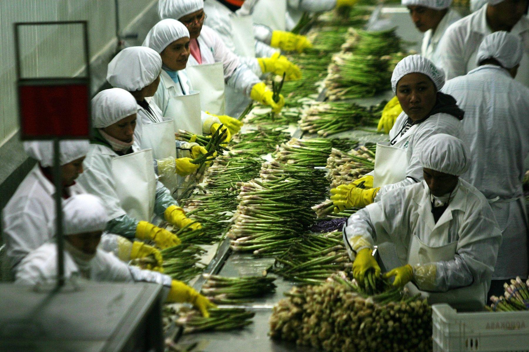 El espárrago y otros productos agroindustriales son la principal oferta exportable de Lambayeque. ANDINA/archivo