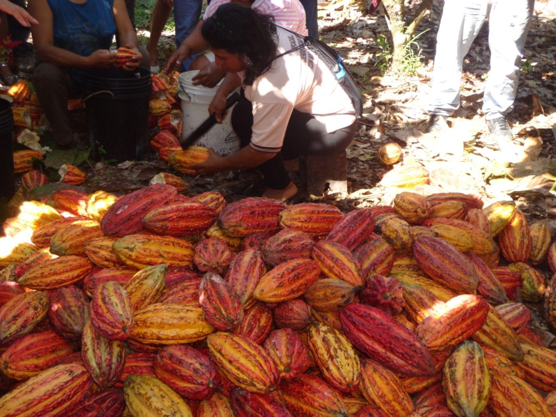 Peruvian cocoa