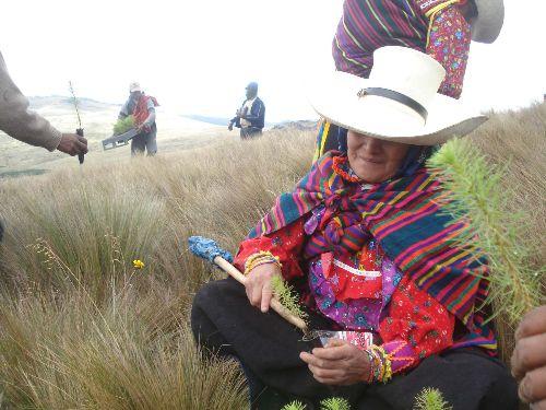 Las comunidades campesinas de Incahuasi participarán en las actividades de reforestación. ANDINA/archivo