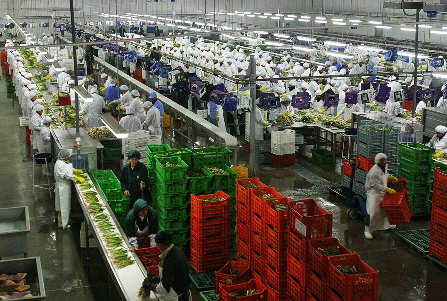 Planta de empacado de vegetales para exportación. ANDINA
