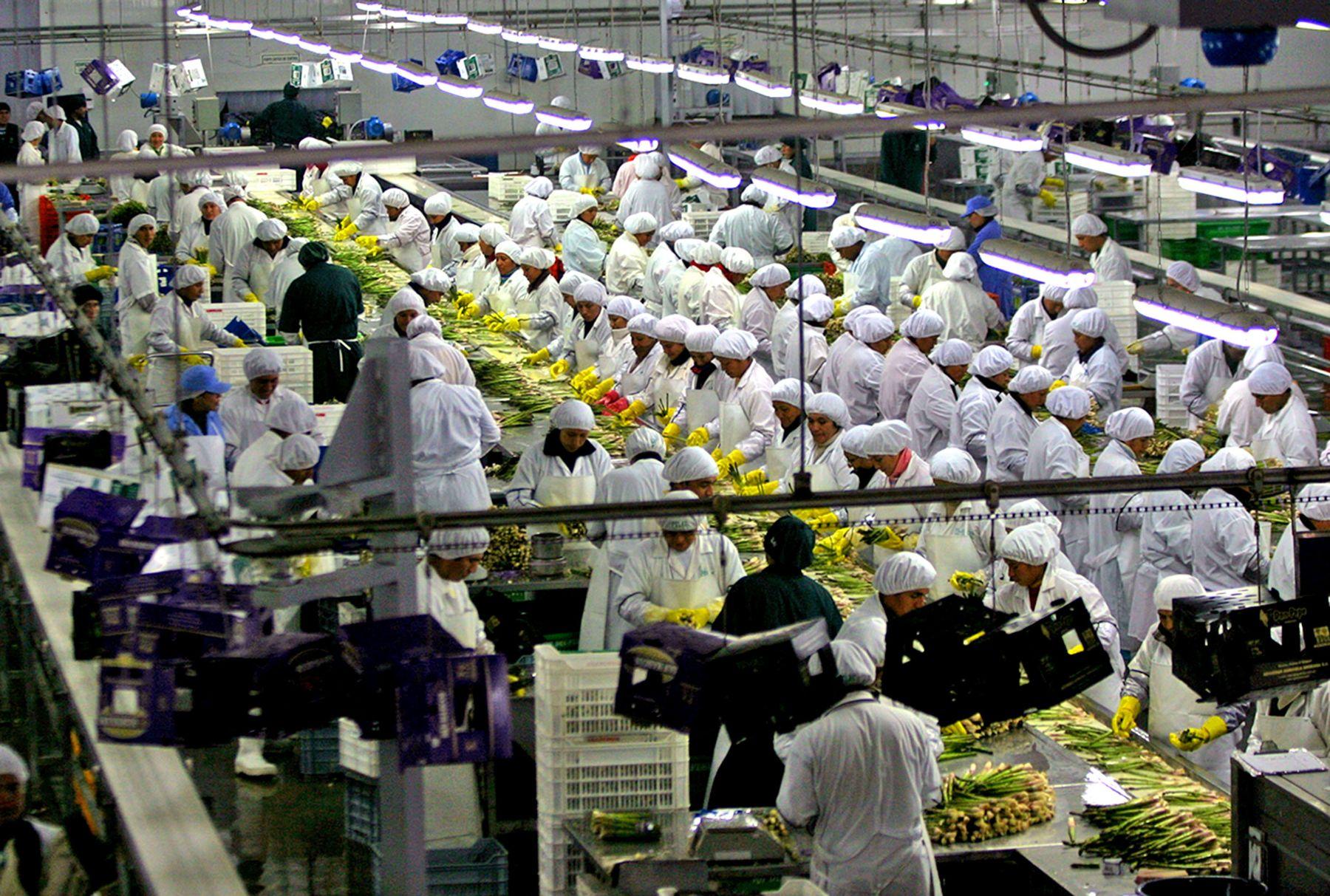 Trabajadores de industria agroexportadora.Foto:  ANDINA.