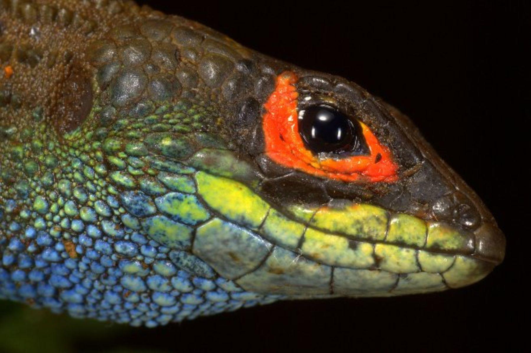 El Parque Nacional del Manu posee una gran biodiversidad. ANDINA/Difusión