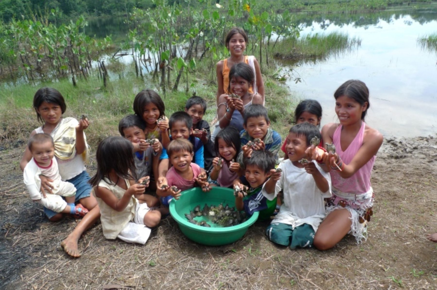 La crianza y venta de taricayas se ha convertido en una fuente de ingresos de las comunidades que habitan en la reserva Pacaya Samiria, en Loreto.