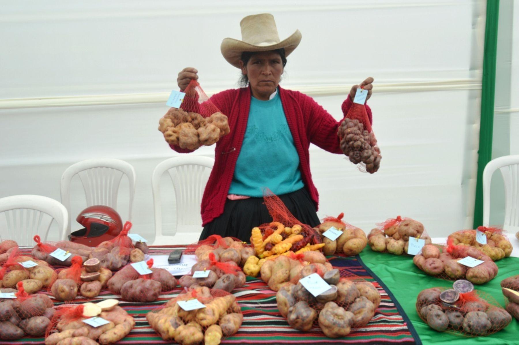 Se inició Festival de la Papa Cajamarquina.