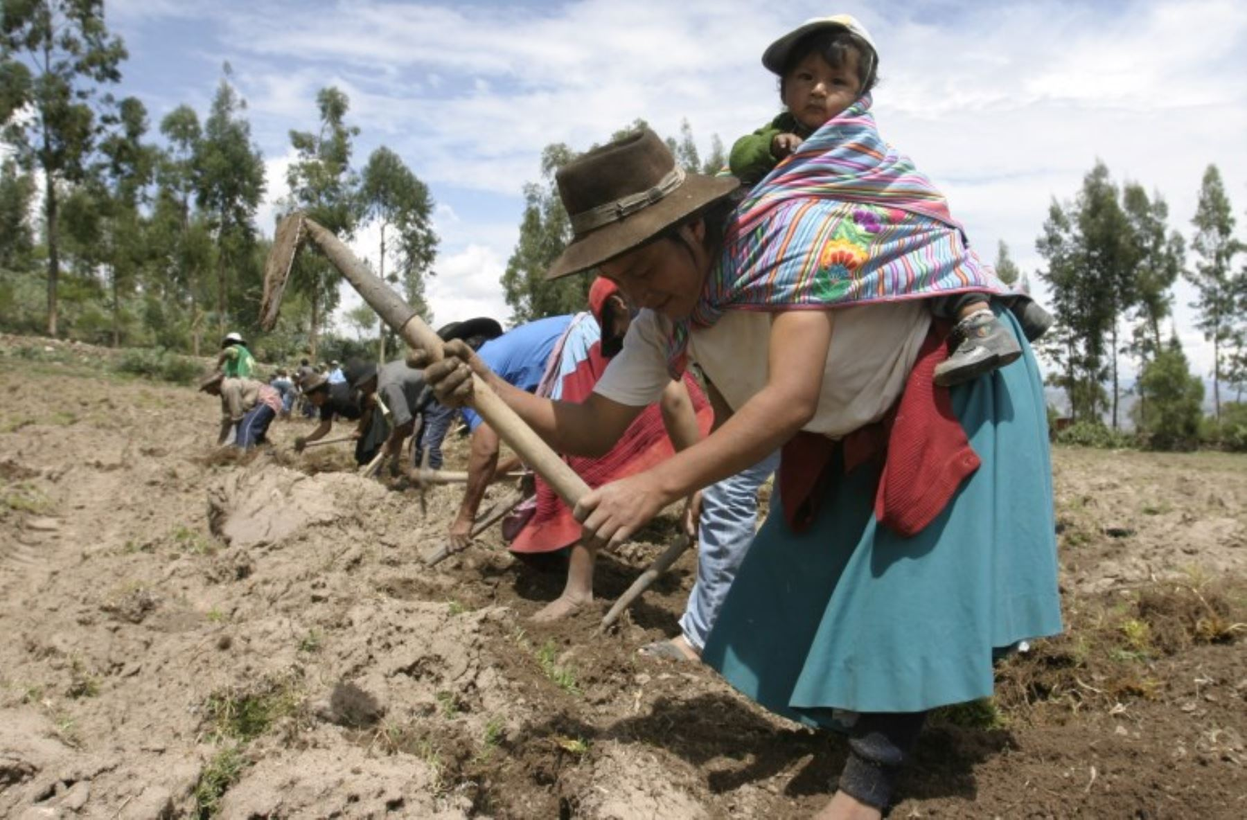 Es indispensable la implementación de políticas específicas para las mujeres debido a que ellas constituyen un pilar fundamental para el crecimiento de la agricultura familiar.ANDINA/archivo