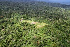 El entorno boscoso de Camisea, ubicado en la selva de Cusco, en camino a recobrar su estado original. ANDINA/Archivo