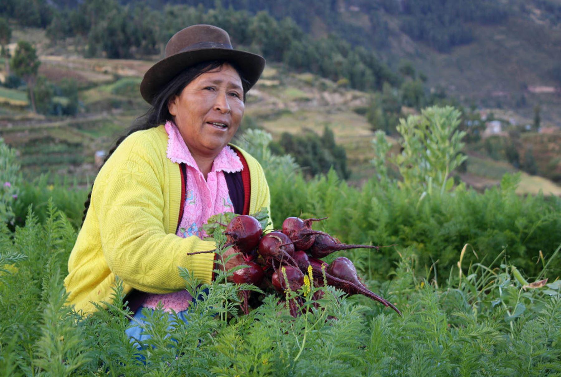 Pequeña agricultura. ANDINA/Difusión