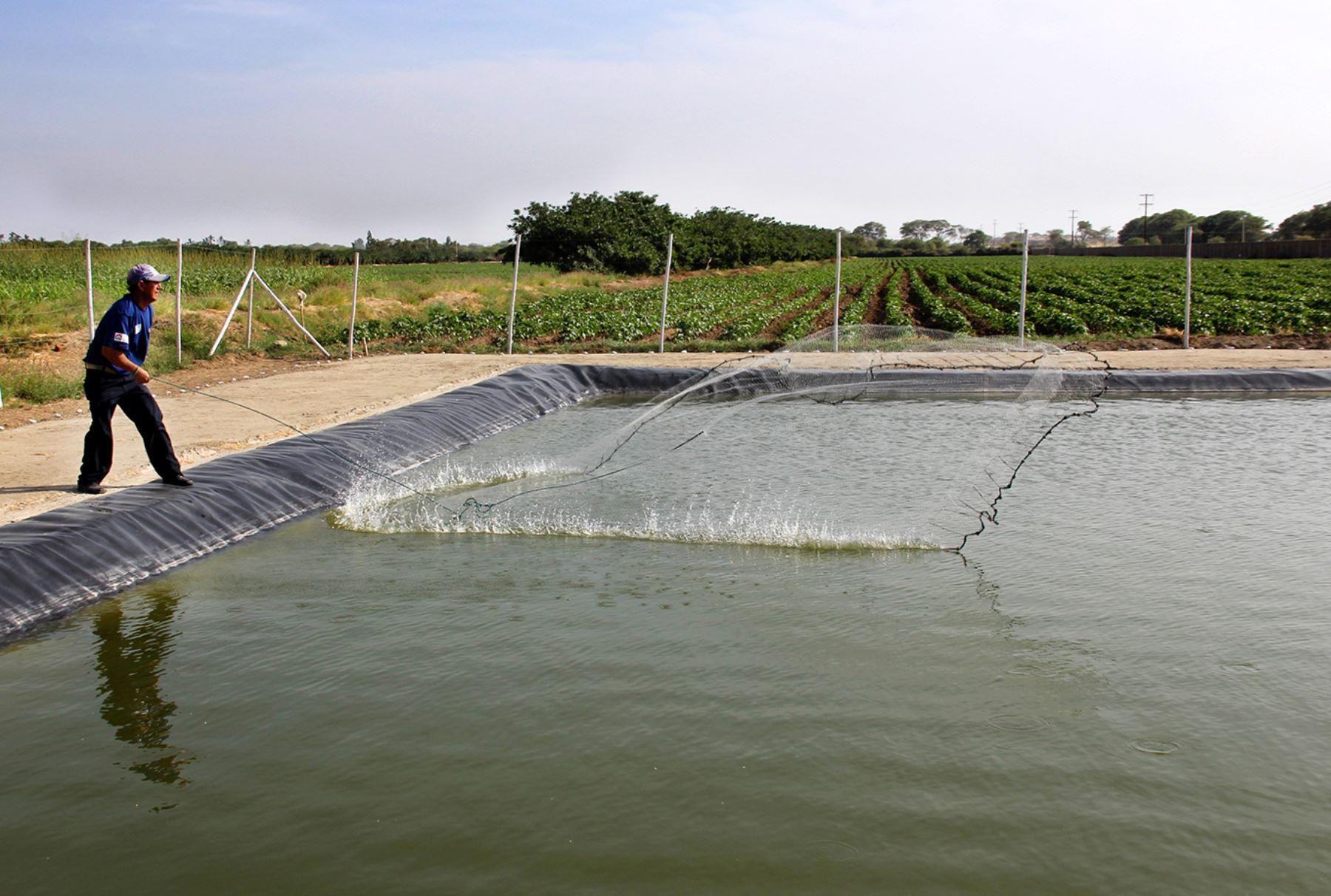 Pozas para la producción acuícola. ANDINA/Difusión