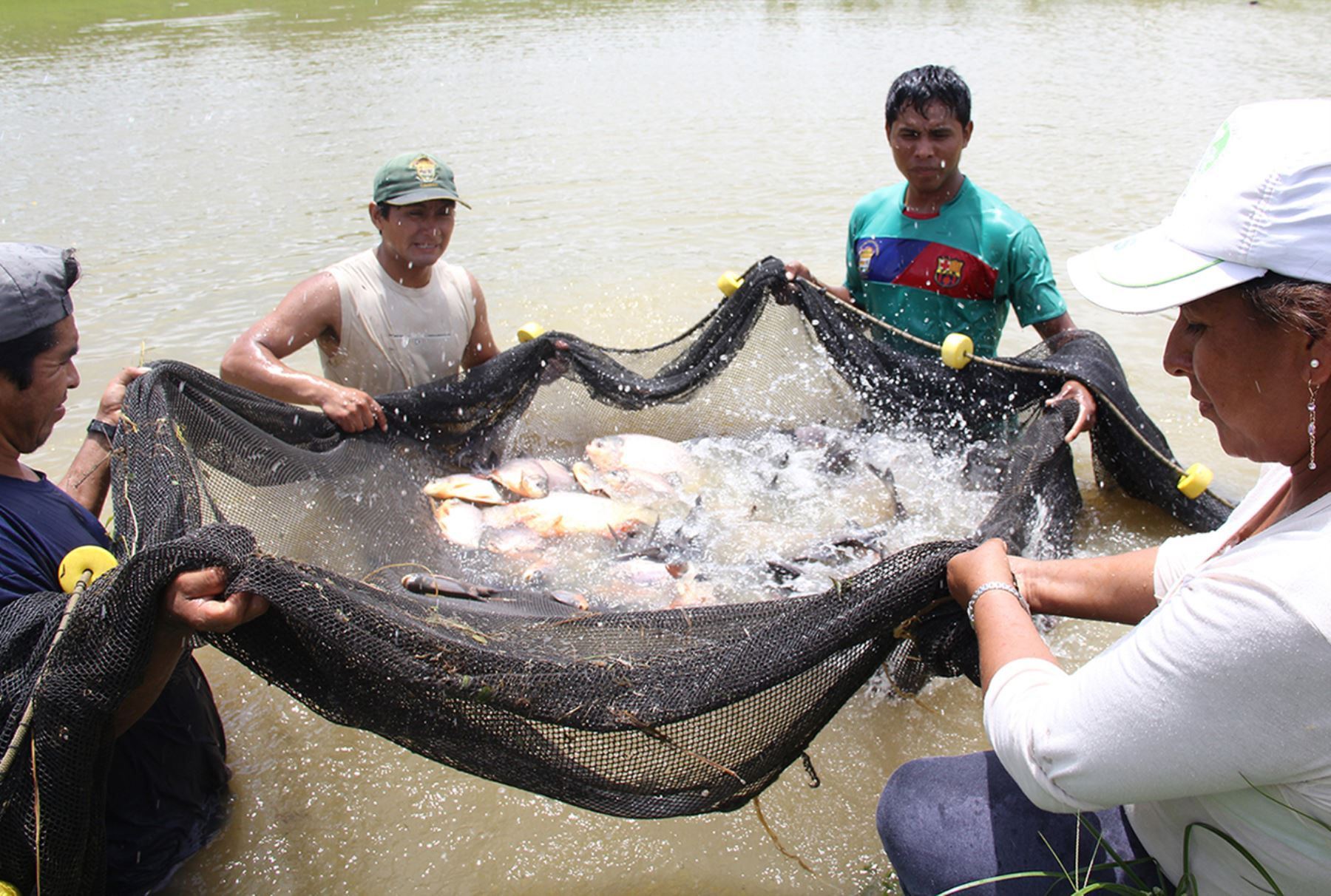 Aquaculture industry created over 102,000 jobs in Peru last