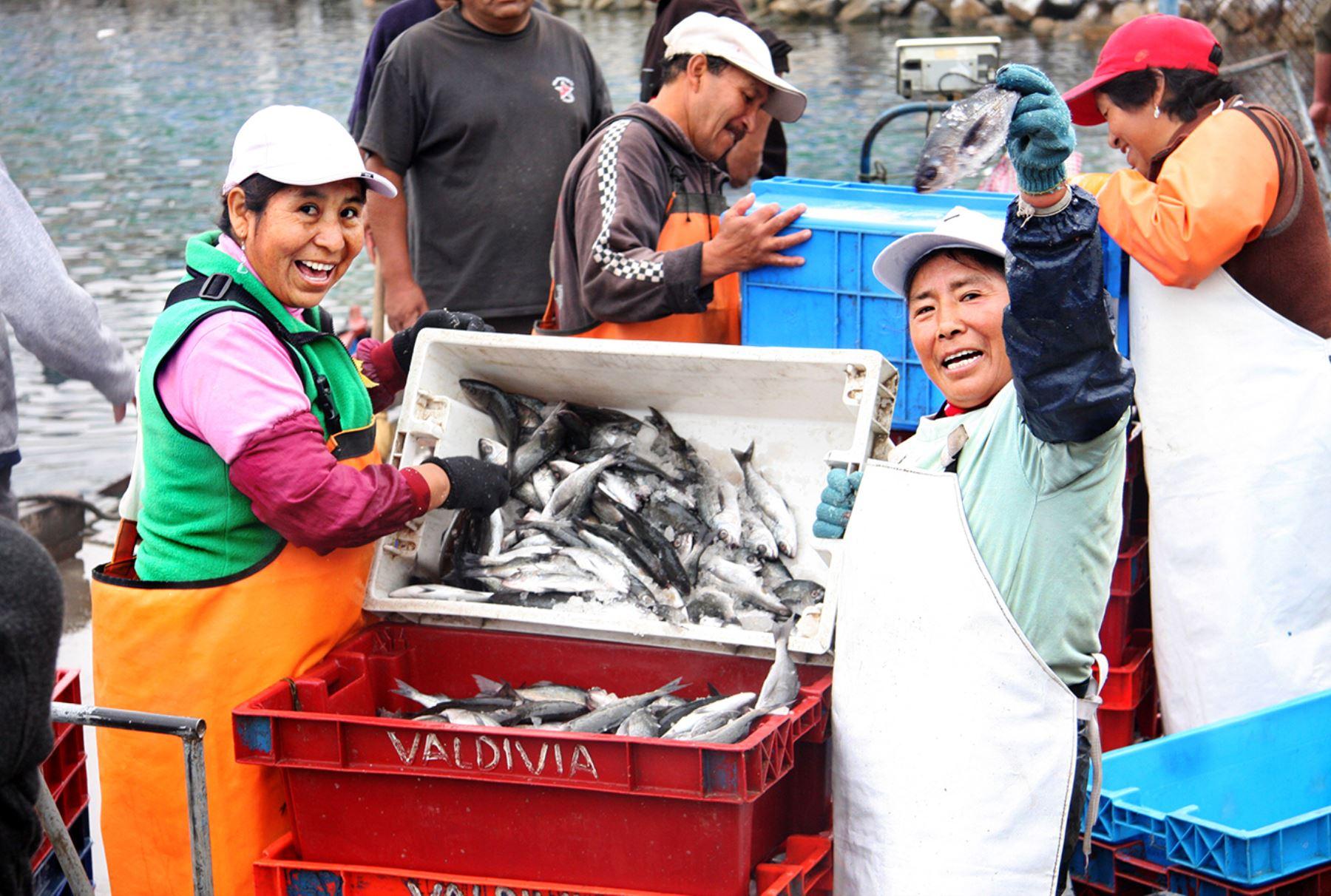 Pescados. Foto: ANDINA/Difusión
