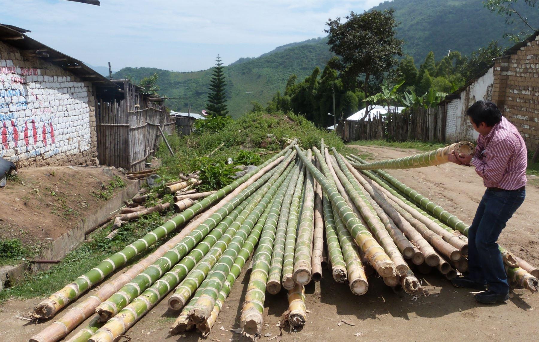 Resaltan beneficios del bambú. ANDINA/archivo