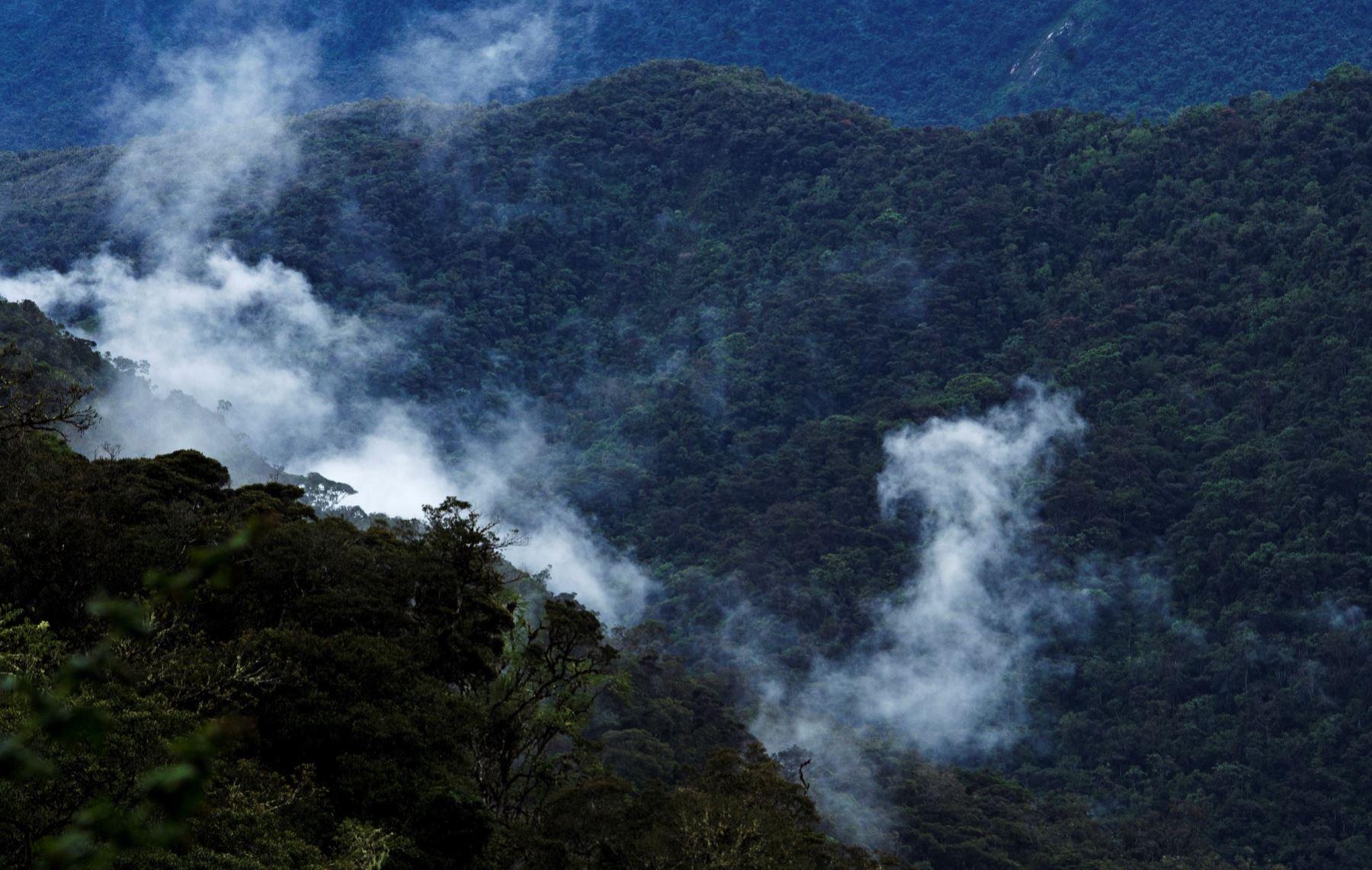 El Bosque Río Abiseo es incluido en Red Iberoamericana de Bosques Modelo. Foto: ANDINA/Difusión