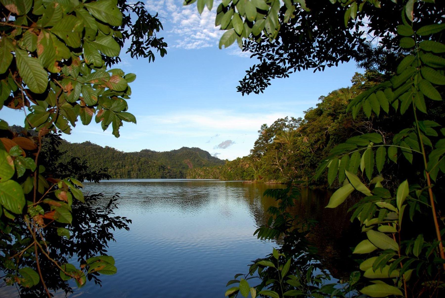 Bosques protegidos en Perú. Foto: ANDINA/Difusión.