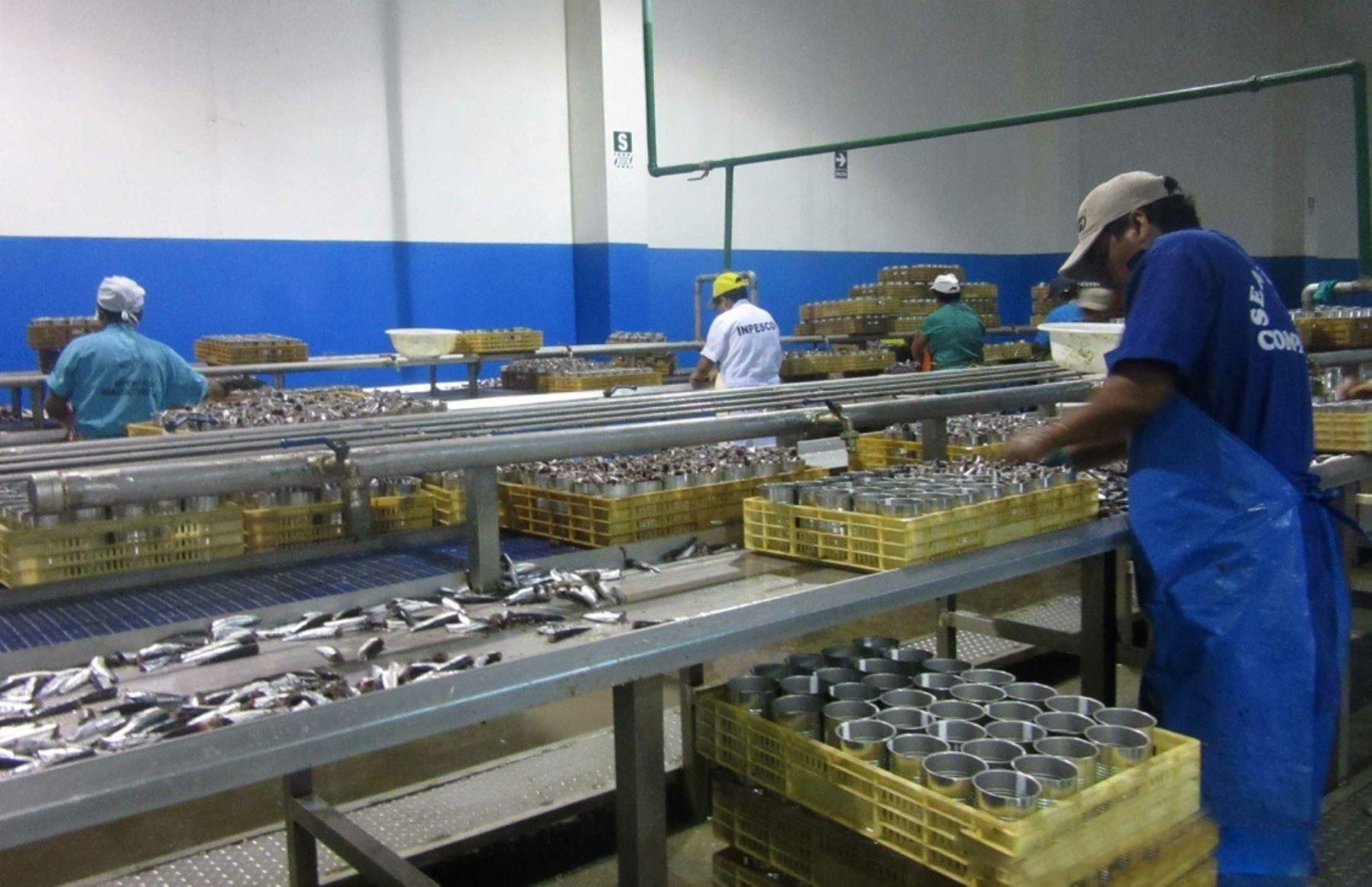 Planta procesadora de pescado. Foto: Cortesía