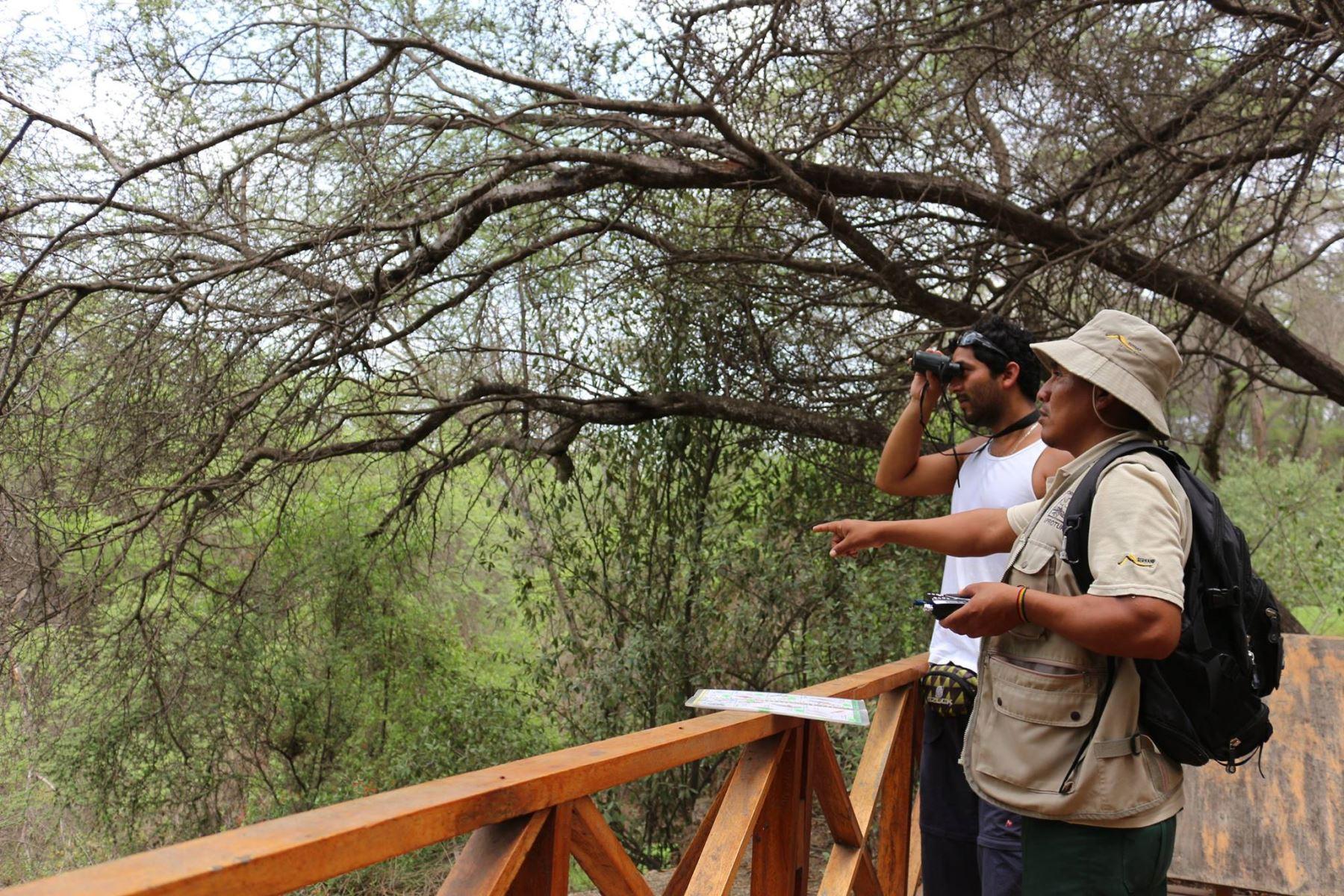 Ofrecerán turismo vivencial en Santuario Histórico Bosque de Pómac. INTERNET/Medios