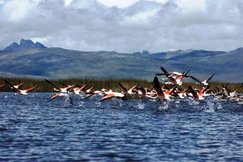 Reserva Nacional de Junín celebra 46 años conservando el ecosistema del lago Chinchaycocha. ANDINA/Difusión