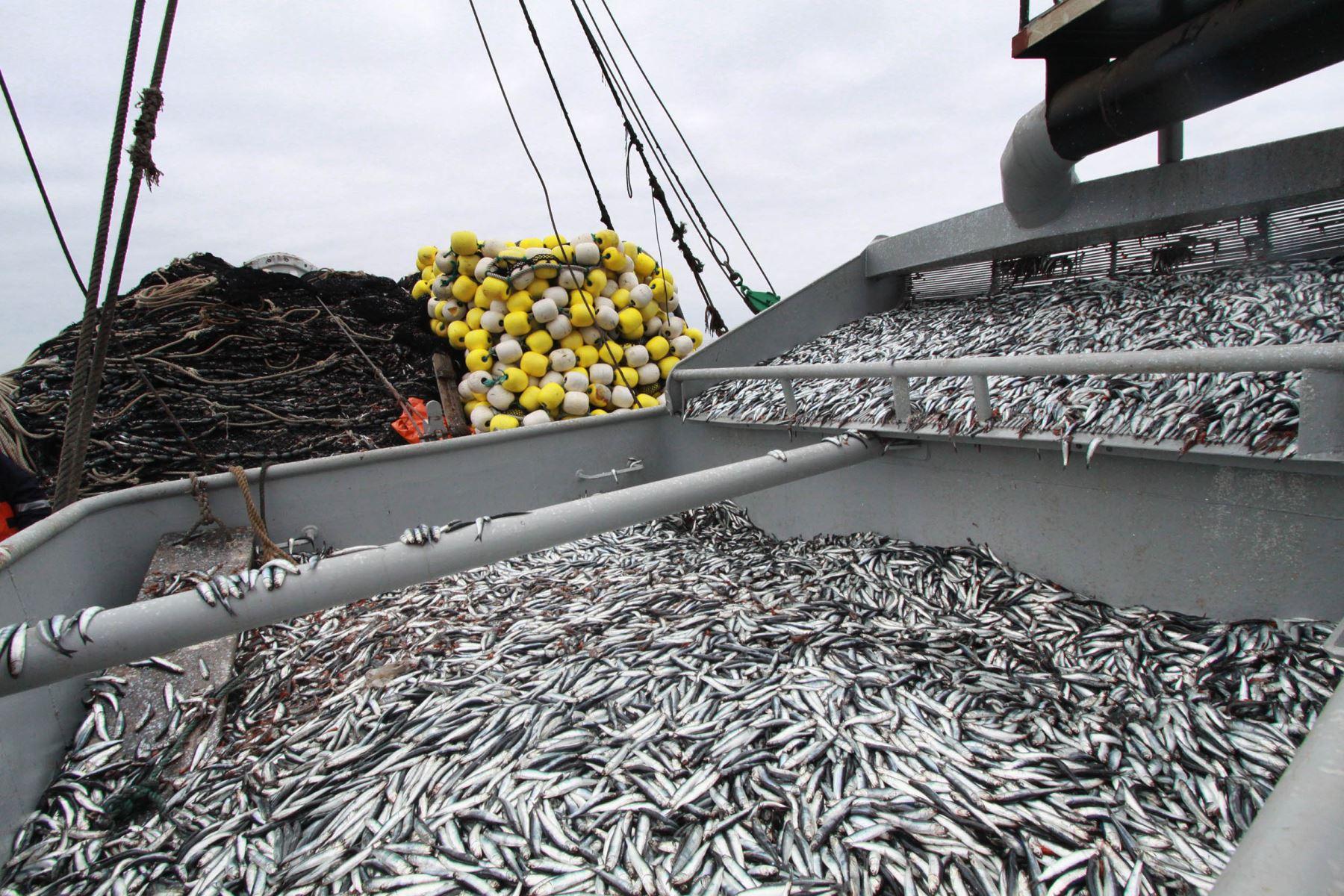 Pesca industrial. Foto: ANDINA/Difusión