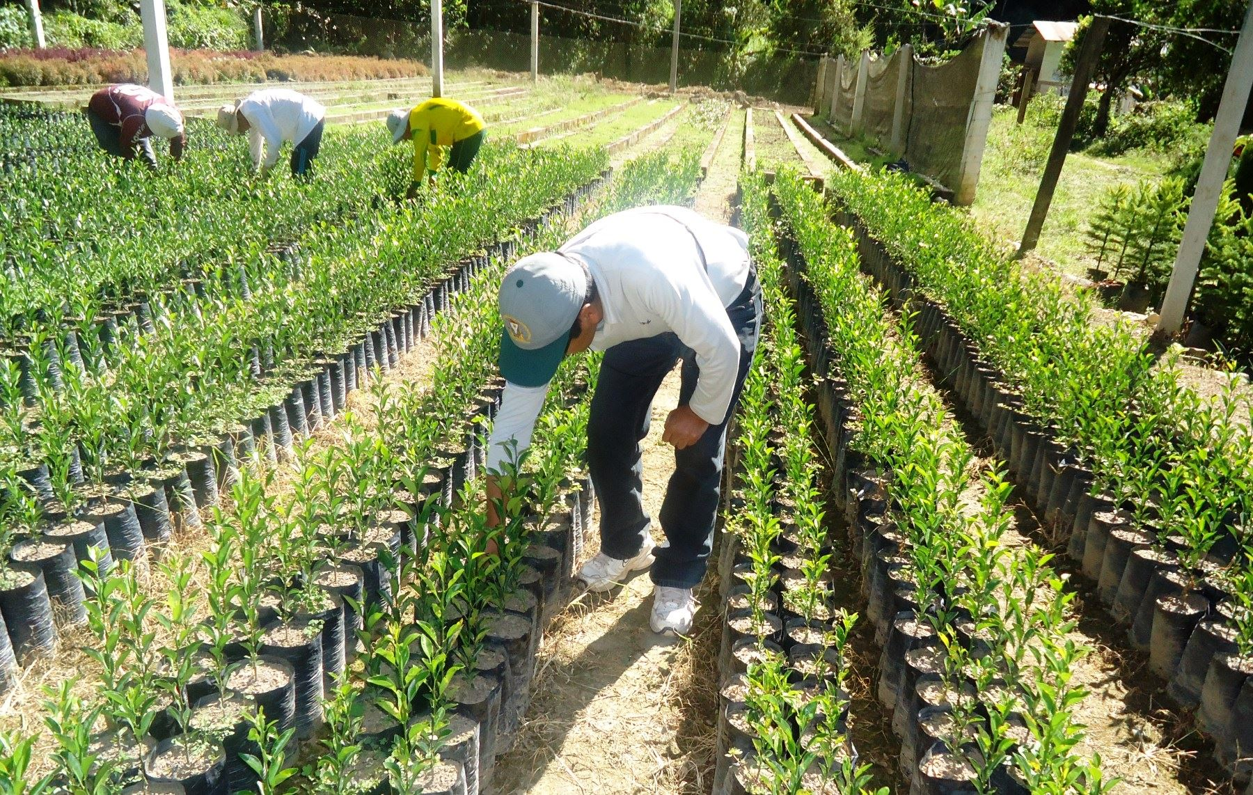 Impulsan cultivo de productos alternativos. ANDINA