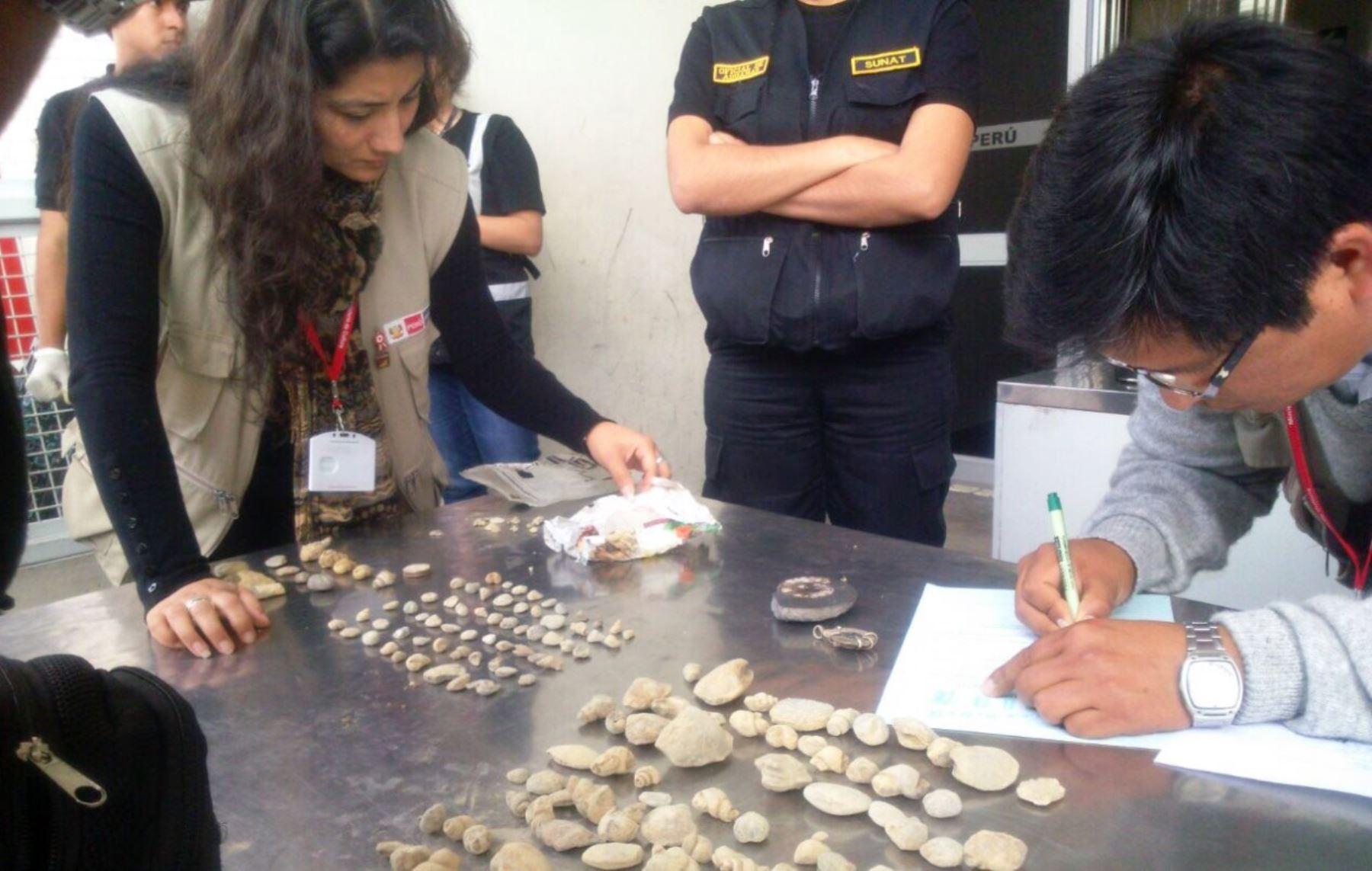 Autoridades incautaron bienes paleontológicos que pretendían ser sacados del país a través de la frontera en Tacna.