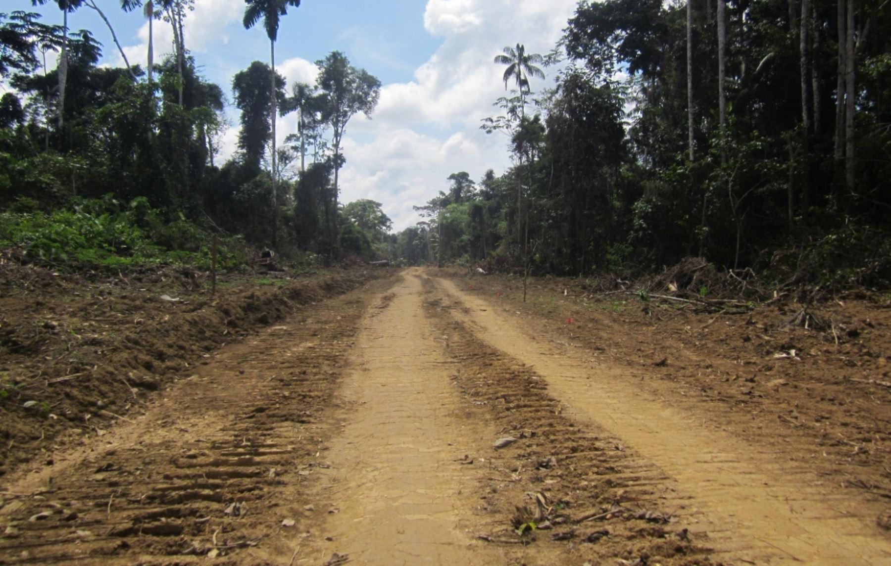 Abren proceso a gobernador regional de Madre de Dios por construcción de carretera en zona de amortiguamiento de Reserva del Manu.