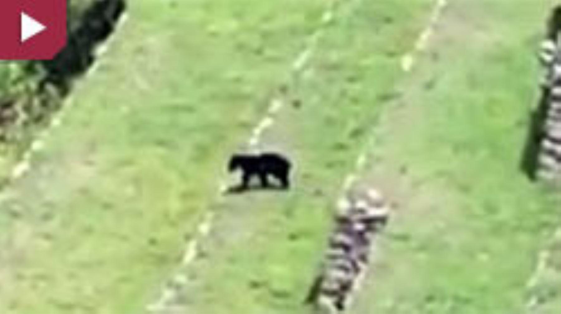 Avistan oso de anteojos en ciudadela Machu Picchu. Foto: Facebook.