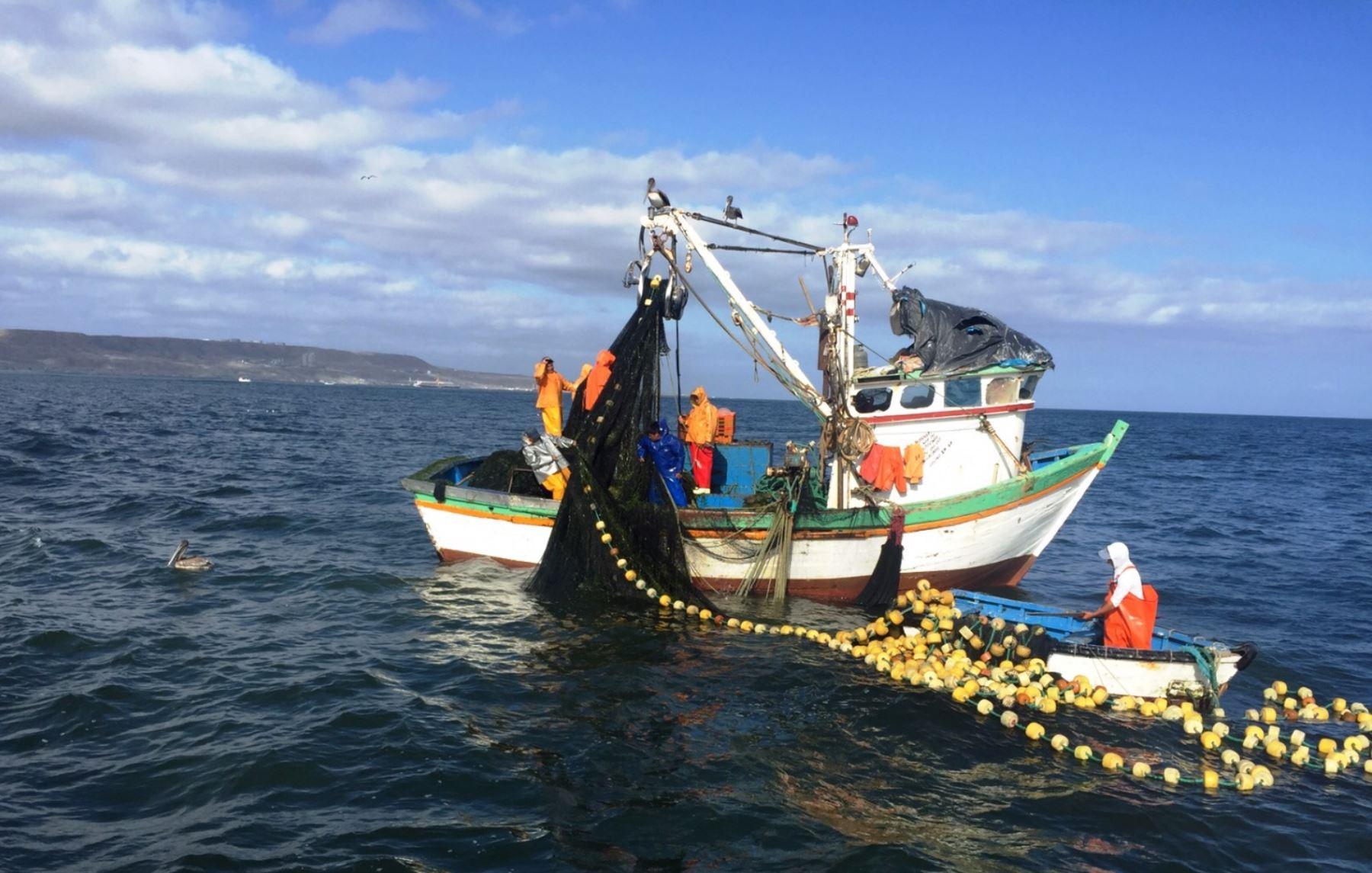 Pesca para consumo humano. Foto: ANDINA