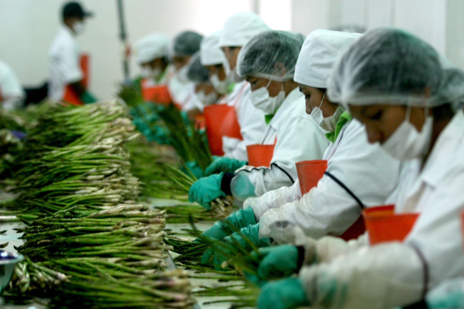 Peru expanded its fresh green asparagus exports to the US market last year