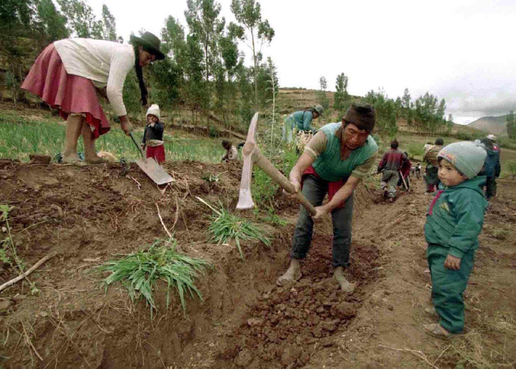 Agricultura. Foto: ANDINA/Archivo.