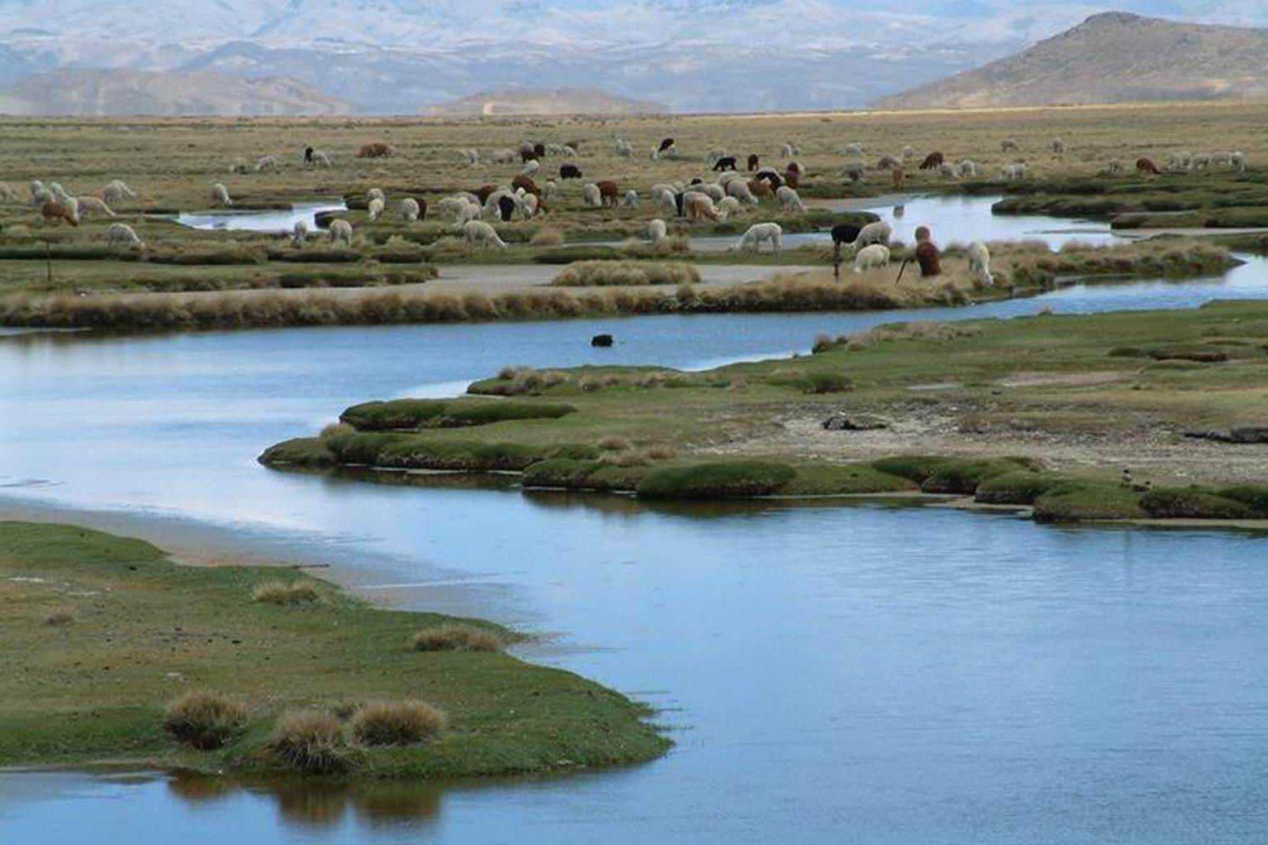 Reserva Salinas y Aguada Blanca. ANDINA/archivo
