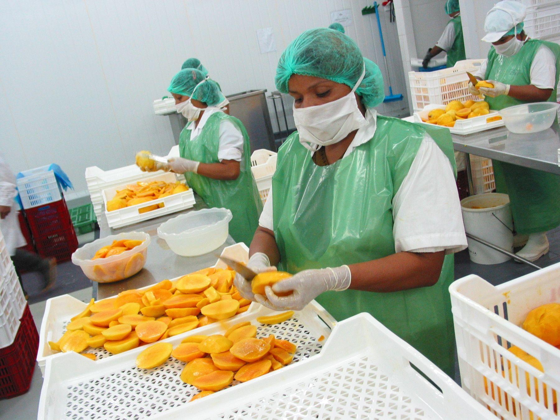 Mangos de exportación. Foto: Cortesía