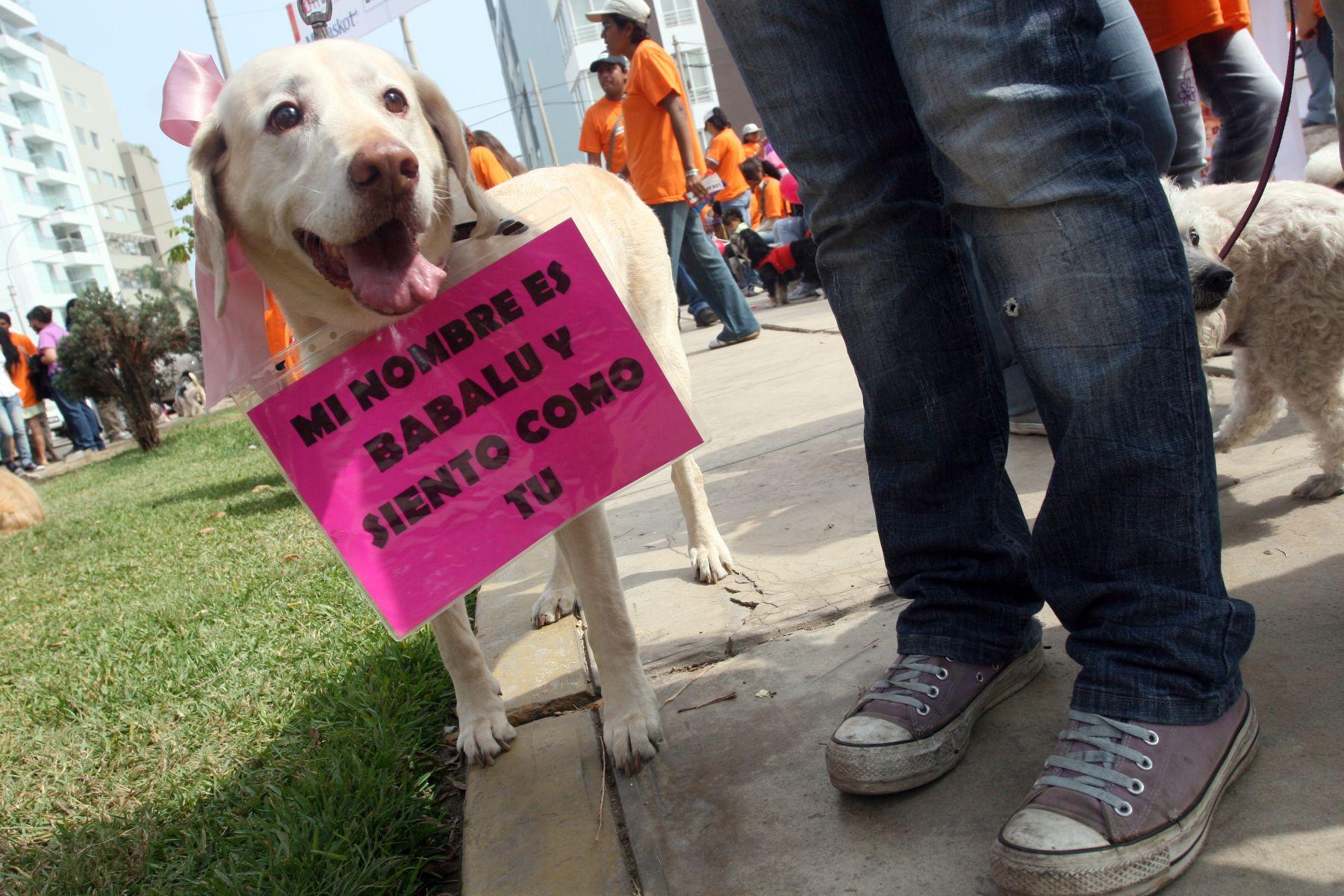 Los animales ahora sí tienen derechos en el Perú. Foto:ANDINA/archivo